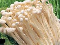 金针菇做法大全|栽培技术