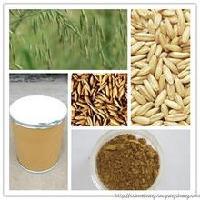燕麦多肽98%   小分子肽   燕麦肽98%  批发价格