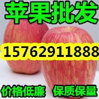 山东纸袋膜袋红富士苹果批发价格