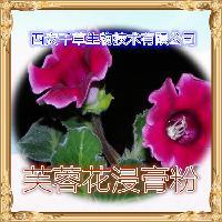芙蓉花浓缩粉 厂家生产纯天然水溶提取物芙蓉花浸膏粉