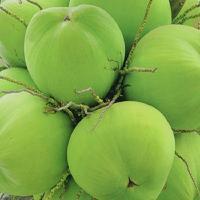 海南双椰食品原料粉 水果粉椰子原粉喷雾干燥粉