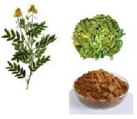 供应  番泻叶提取物10:1  番泻叶粉  25公斤起订