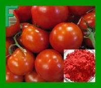 番茄膳食纤维 厂家直销  番茄提取物  番茄粉