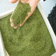 各种规格低农绿茶片 有机绿茶片 国标绿茶片 袋泡茶原料