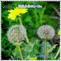 蒲公英提取物10:1 蒲公英黄酮5~15% 慈缘生物 专业生产